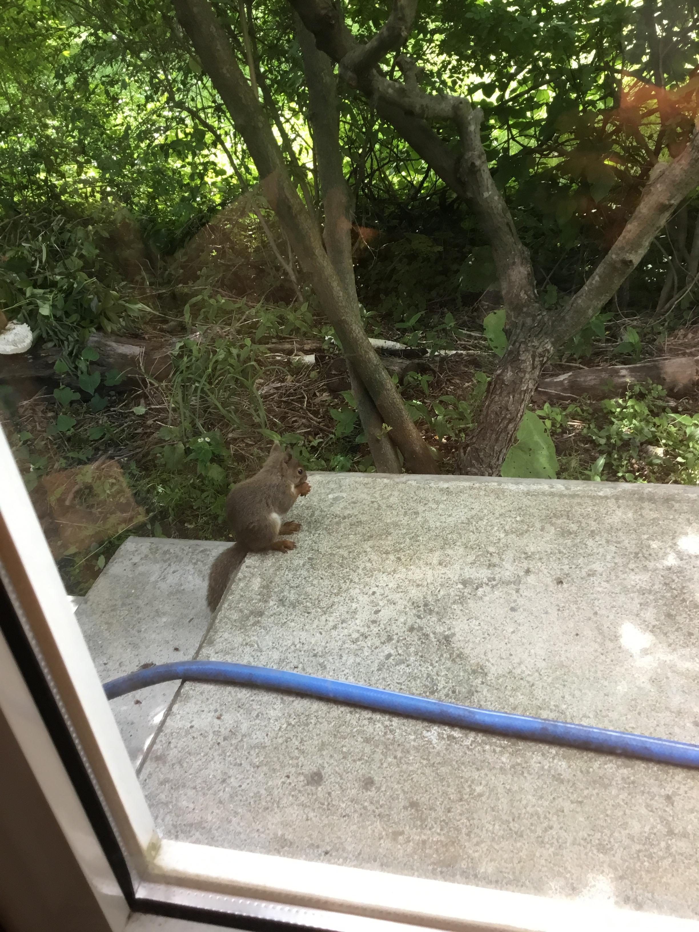 【八戸】野生動物の癒し 外壁塗装 屋根塗装 塗装業者 塗装屋 塗装会社
